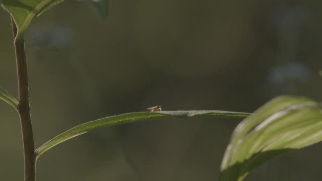 macro shot of a tiny fly on a leaf - styria filmów i materiałów b-roll