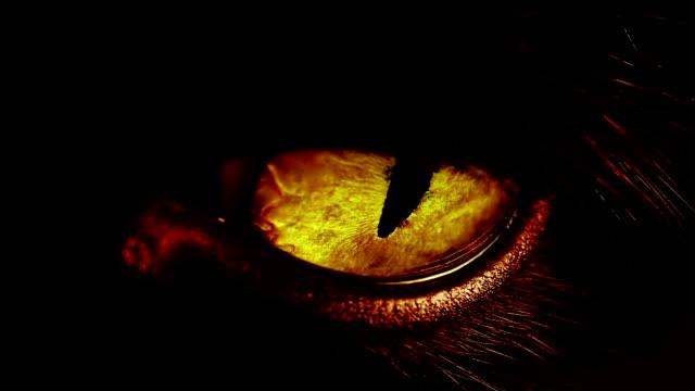 makro skott av en gul katt-öga. - päls textil bildbanksvideor och videomaterial från bakom kulisserna