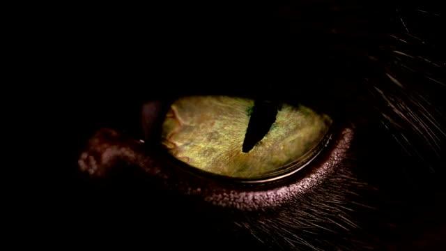 노란색 / 금색 고양이 눈의 매크로 샷. - black friday 스톡 비디오 및 b-롤 화면