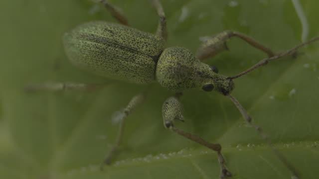 macro shot of an insect sitting on a wet leaf - styria filmów i materiałów b-roll