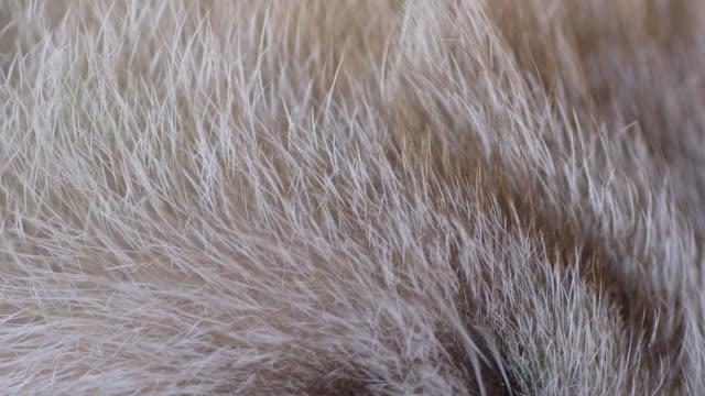 macro shot of cat's меха - кошка смешанной породы стоковые видео и кадры b-roll
