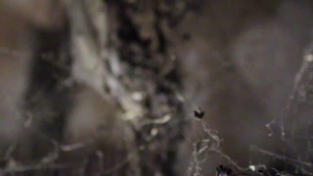Macro Shot of Spider Nest