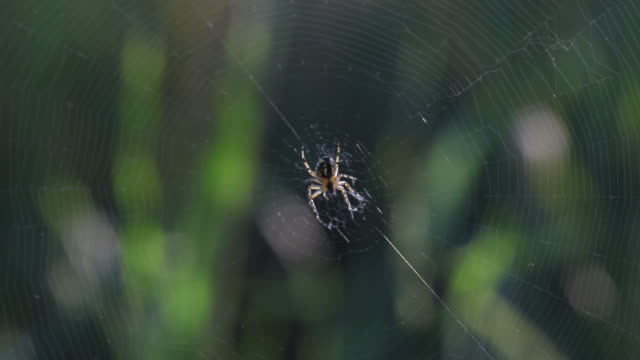 Macro video of spider in its web on dark background video