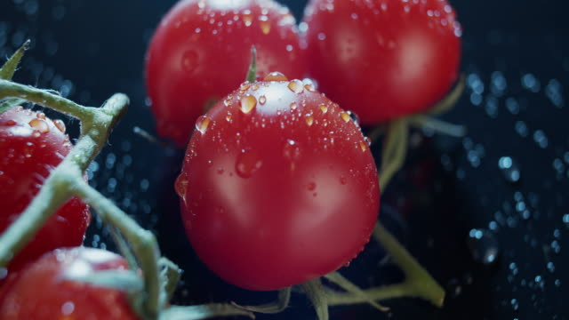 Macro view of ripe tomatoes on branch, dark background, for ads and packshot Macro view of ripe tomatoes on branch, dark background. Wet green leaves of fresh vegetables, healthy eating concept, nutritious raw food. Organic local products is always preffered. For ads,packshot tomato salad stock videos & royalty-free footage