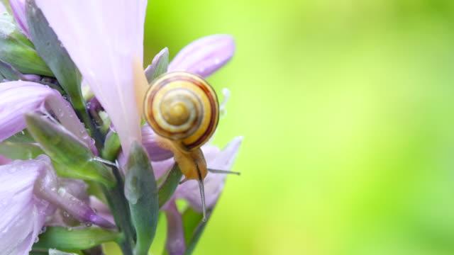Macro view of Snail video
