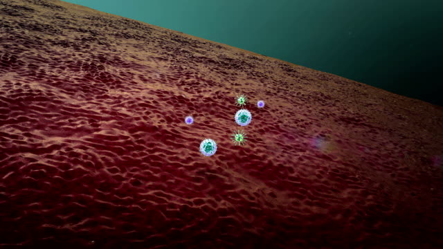 macrophage and virus