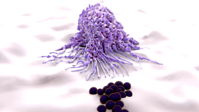 Macrophage approaching to and engulfing bacteria (cocci) video