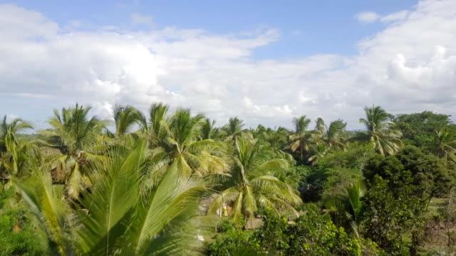 vídeos de stock e filmes b-roll de madagascar mahambo tropical coast drone view - oleo palma