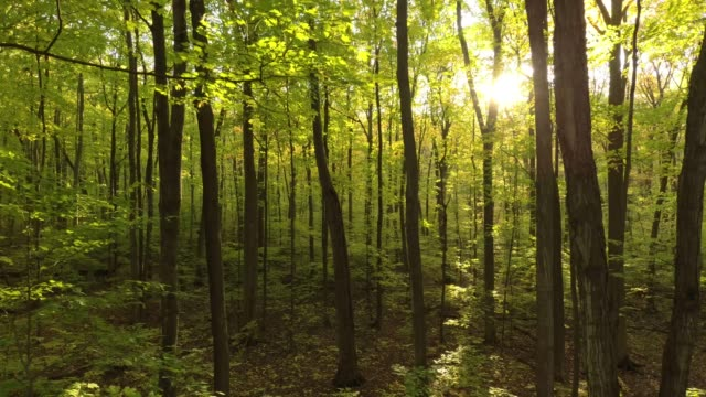 Magic aerial shot within forest trees in fall with sun piercing thru leaves