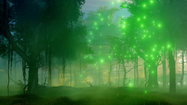Magic lights in misty night forest video
