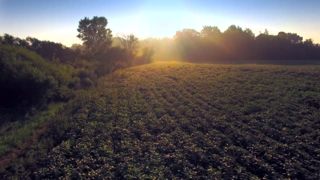 Magic Morning Over Misty Soybean Field, Rural Agriculture video