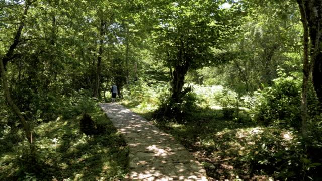 Conto mágico na floresta tropical, Geórgia - vídeo