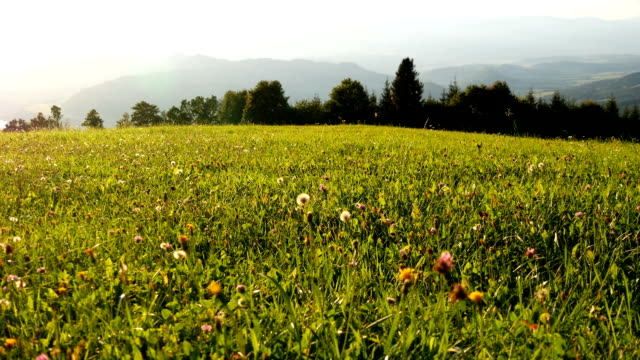 Magnificent mountain landscape of the Austrian Alps, view of the meadow with lush green grass video