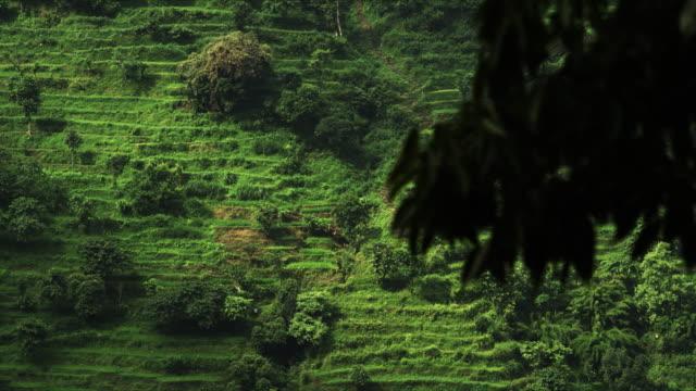 magnificent view of the kathmandu rice terraces in nepal - longji tetian filmów i materiałów b-roll