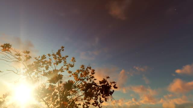 Magnolia flowers against beautiful sunset, 4K video