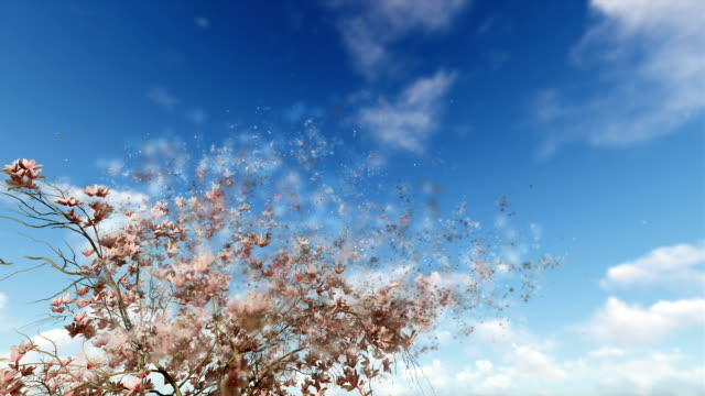 Magnolia flowers and flying pigeons against blue sky, particles flying video