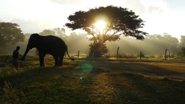 vídeos de stock, filmes e b-roll de mahout passeie de elefante e tome um banho de elefantes no rio - cultura tailandesa
