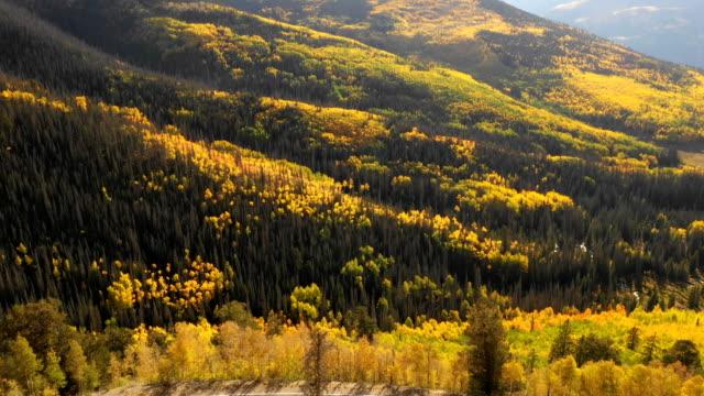 vídeos de stock, filmes e b-roll de majestic aspens e pines em golden hour por drone - condado de pitkin