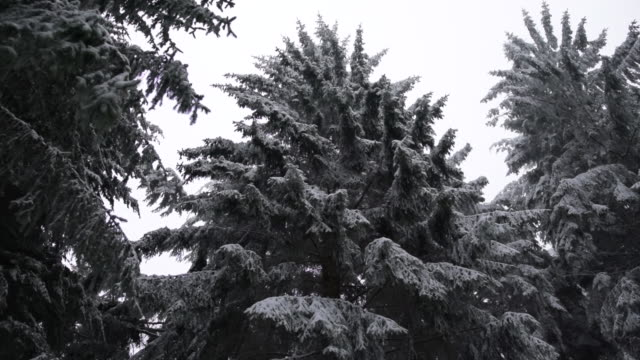 majestic snowy forest trees dark and white - центральная европа стоковые видео и кадры b-roll