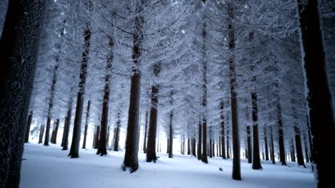 vidéos et rushes de la majestueuse forêt d'hiver - panoramique