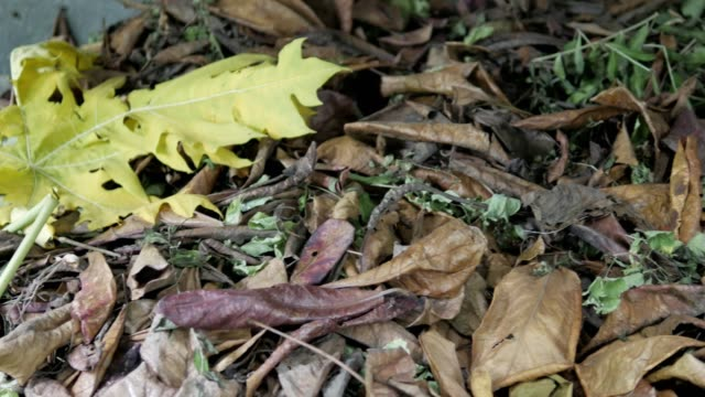 make compost from dry leaves
