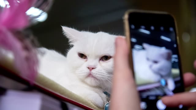 Making Photo of White Cat With Blue Pendant video