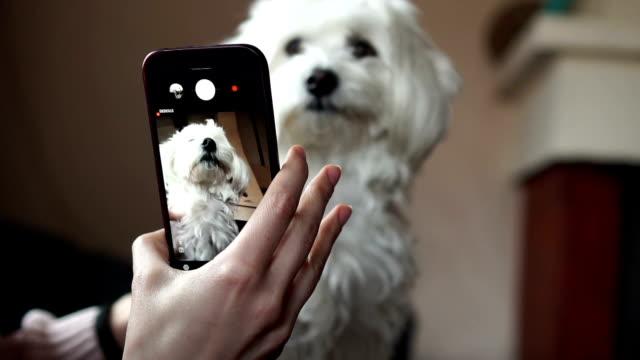 vídeos de stock e filmes b-roll de making selfie for puppy - fotografar
