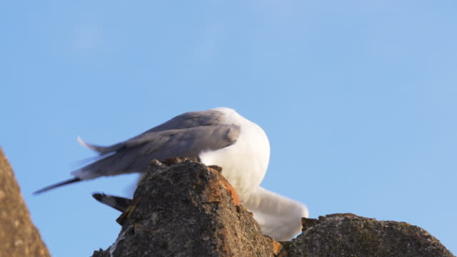 malaga sunny day seagull clean close up view 4k
