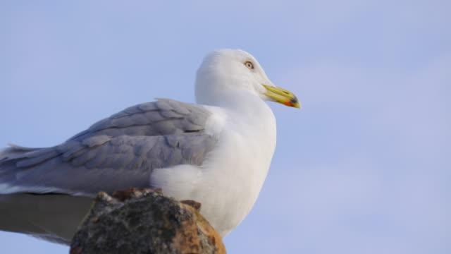 malaga sunny day seagull close up view 4k