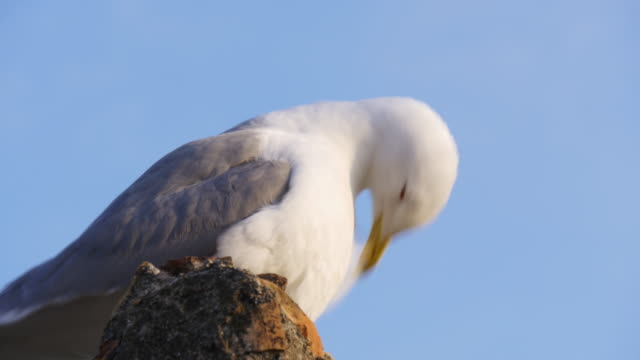 malaga sunny day seagull close view 4k