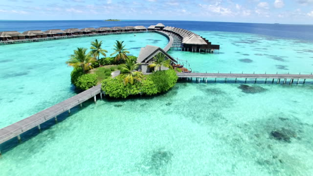 maldives, tropical paradise - ayada island - albero tropicale video stock e b–roll