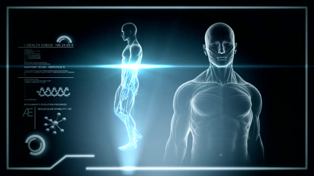 Male anatomy - Human Brain Scan - Stock video Hologram of Human Full Body, Nervous Anatomy, Skeleton 3D Male Walking, Medical Touch Screen Scan, Loop animal skeleton stock videos & royalty-free footage