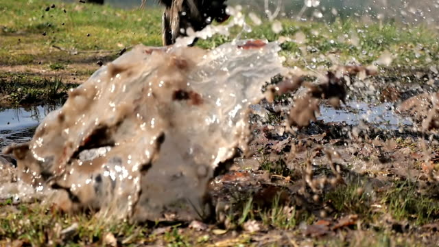 Male athlete running and jumping into a puddle video