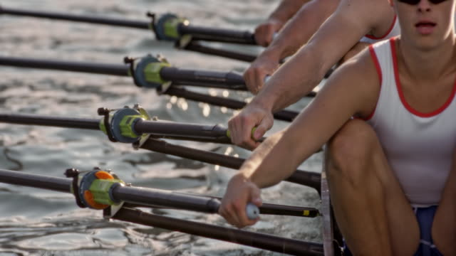 slo mo male athletes sculling on a lake, striking water with cleaver sculls - ripetizione video stock e b–roll