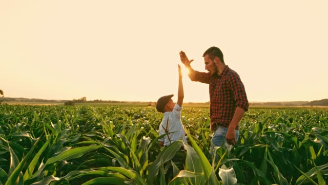 vídeos de stock e filmes b-roll de male farmer and son talking and high-fiving in sunny,idyllic rural corn field,real time - future hug