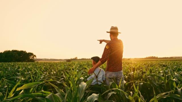 manliga jordbrukare och son talar och hög fiving i soliga, idylliska landsbygden majsfält, realtid - enbarnsfamilj bildbanksvideor och videomaterial från bakom kulisserna