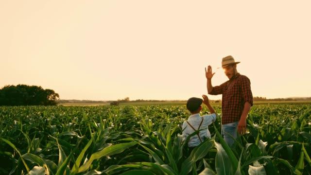 stockvideo's en b-roll-footage met mannelijke boer en zoon met digitale tablet praten en high-fiving in zonnige, idyllische landelijke maïsveld, real-time - organische boerderij