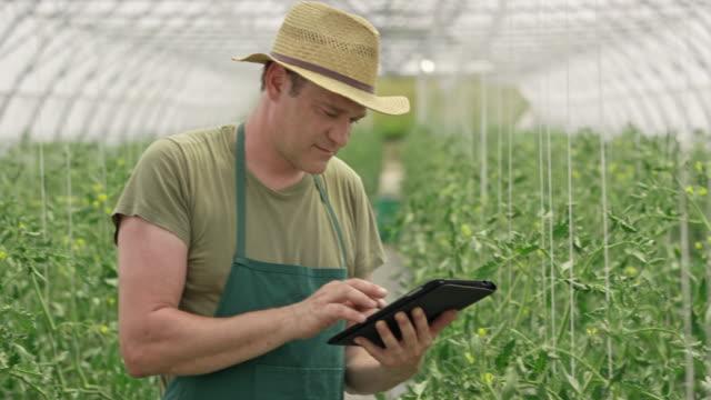 male farmer checking tomatoes and using a digital tablet - gospodarstwo ekologiczne filmów i materiałów b-roll