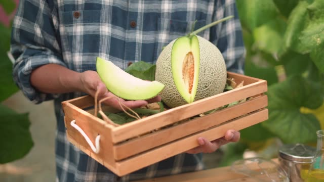 A male farmer holding fresh cantaloupe in the wooden crate