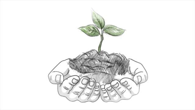 agricoltore maschio che tiene in mano la giovane pianta arborea, paesaggio della siccità sullo sfondo. cambiamenti climatici, mancanza di acqua potabile fresca. schizzo - braccio umano video stock e b–roll