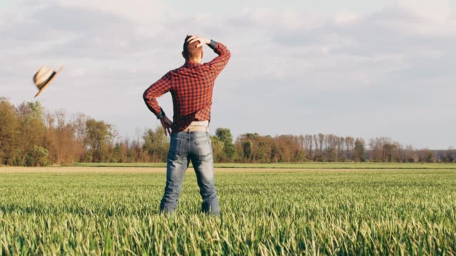 male farmer standing with hands on hips in sunny,idyllic rural green wheat field,slow motion - cappello video stock e b–roll
