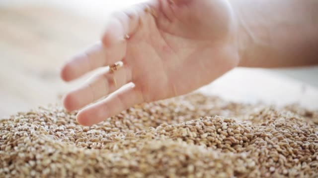male farmers hand pouring malt or cereal grains agriculture, farming, prosperity, harvest and people concept - male farmers hand grabbing and pouring malt or cereal grains handful stock videos & royalty-free footage