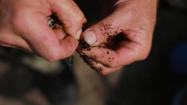 männlicher fischer hände vorbereitung angelwurm auf haken aus nächster nähe - angelhaken stock-videos und b-roll-filmmaterial