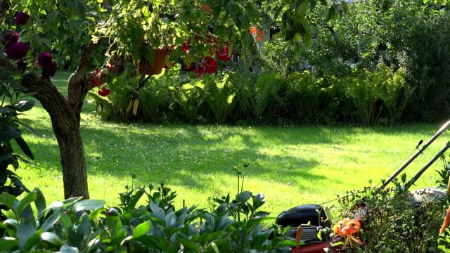 Male gardener mowing grass between flowers and fruit trees in garden backyard. FullHD video