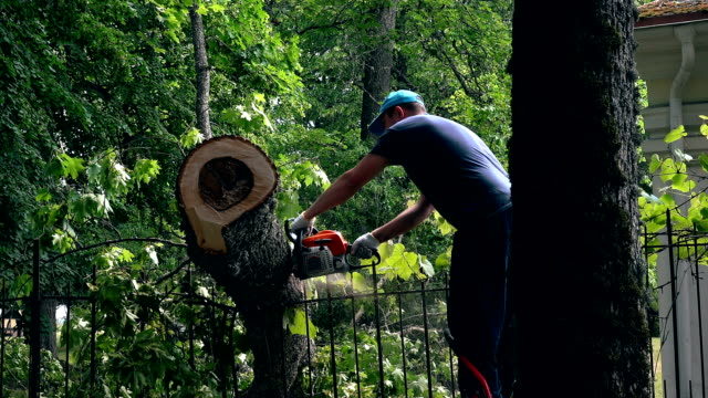 male gardener working on felled tree with chain saw. - albero caduto video stock e b–roll