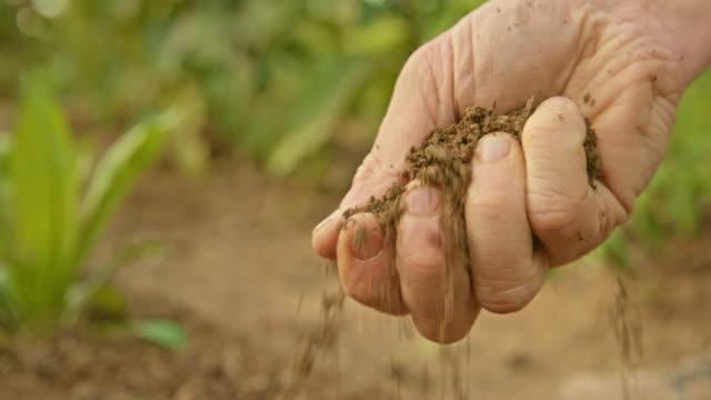 품질을 확인하기 위해 정원 토양을 잡는 남성 손 - 유기농 스톡 비디오 및 b-롤 화면