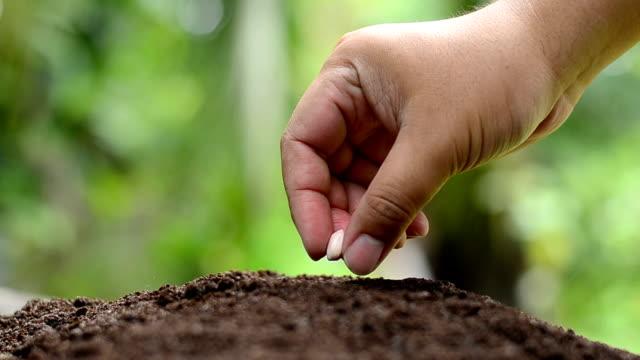 Male hand is seeding peanut video