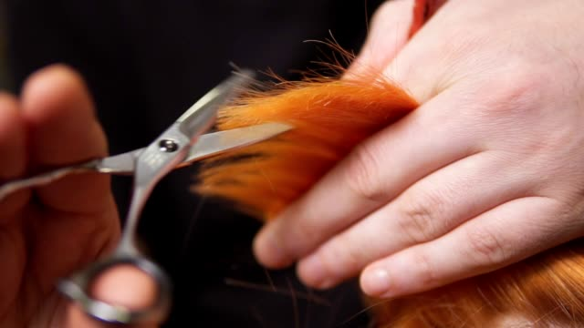 Male hands holding a hair strand and cutting it using scissors and comb. Closeup view of redhead woman's hair being cut by a professional hairdresser in beauty salon. Slowmotion shot Male hands holding a hair strand and cutting it using scissors and comb. Closeup view of redhead woman's hair being cut by a professional hairdresser in beauty salon. Slowmotion shot. human hair stock videos & royalty-free footage