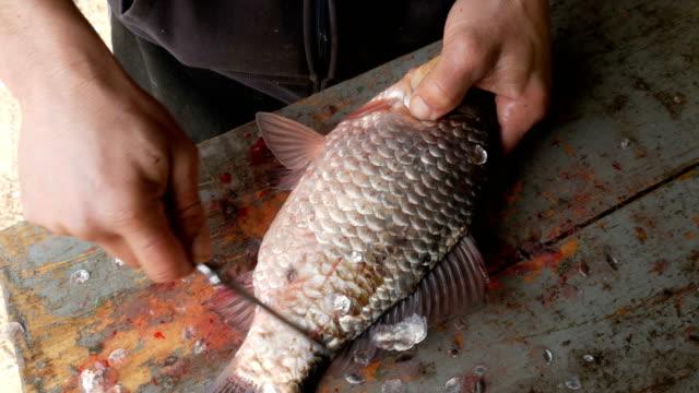 vídeos de stock, filmes e b-roll de mãos masculinas que descascam escalas de peixes - descascado