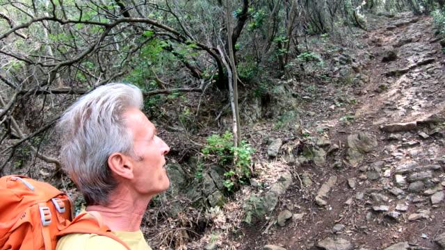 vidéos et rushes de randonneur mâle monte le sentier à travers la forêt de feuillus feuillus - évasion du réel
